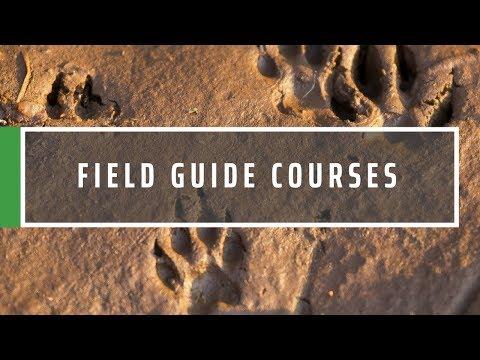 Safari Field Guide Course   South Africa