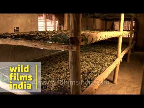 Silk worm farming in Karnataka