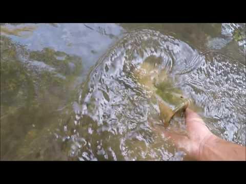 Cold Creek Treasure Hunting:  Bottle Retrieval