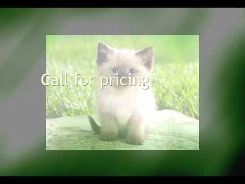 Need Pet Transport To Algeria Call Animals Away