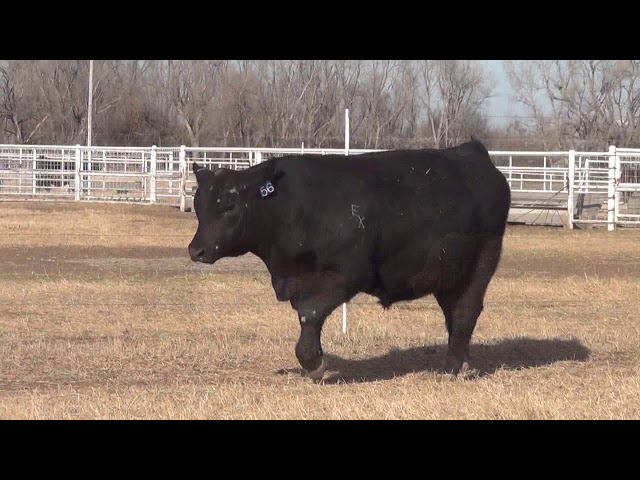 Express Ranches Lot 56