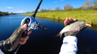 Fishing With Wild Shiners for Big Bass!! (Stick Marsh)