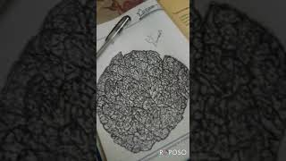 Pen sketches creating optical illusion drawing  using pen  watch closely