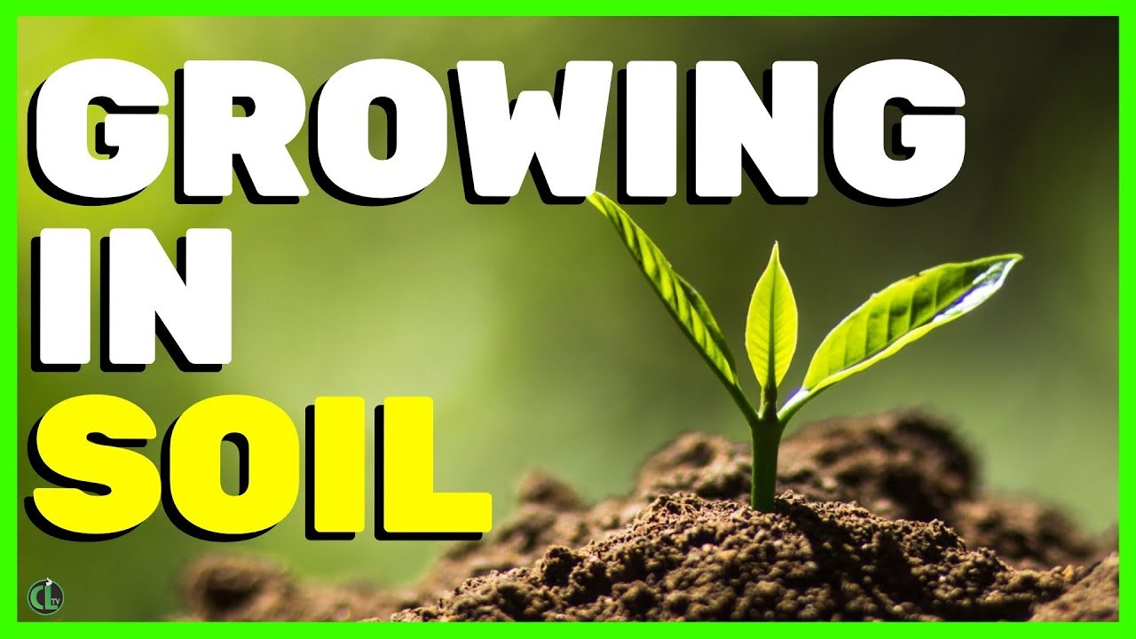 Growing Cannabis in Soil - YouTube