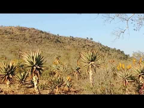 Tugela River Msinga KZN