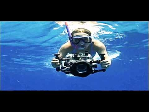 Dolphin wildlife - Animals amazing hidden deep under the sea - Discovery