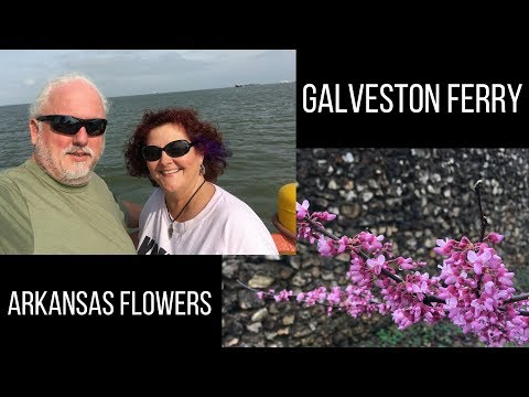 Galveston-Port Bolivar Ferry and Arkansas Spring Flowers