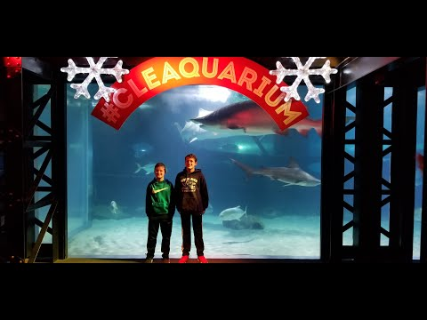 Cleveland Aquarium / Have You Ever Been? /Our Experience