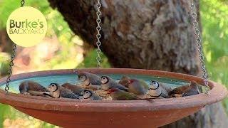Burke's Backyard, Making A Bird Feeder