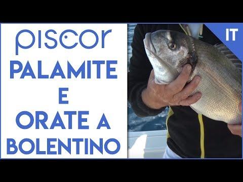 Pesca dalla Barca: Orata, Sgombro e Palamita a bolentino