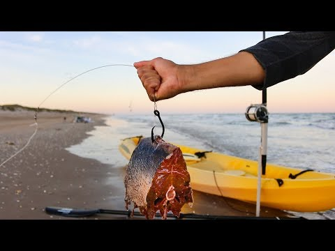 using big chunks of MEAT to catch sharks at the beach