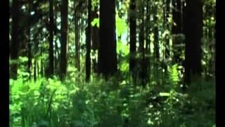Мудрец Йога Васиштха - Обучение Рамы и полное понимание истинного абсолюта  098