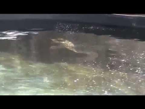 Archelon Sea Turtle Protection Society Rescue Centre ...
