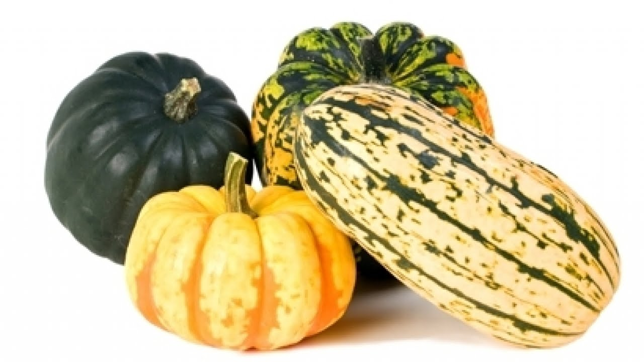 littleton co looking for pumpkins visit jared u0027s nursery gift
