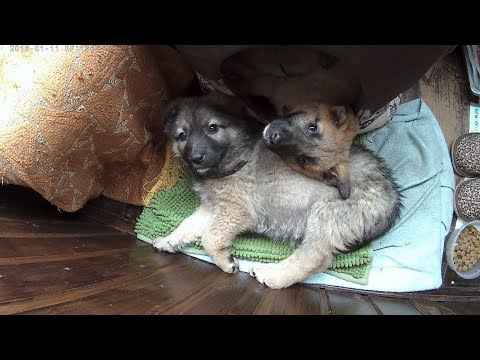 Помогите пристроить щенка в семью! В добрые руки. Помогите мне друзья!