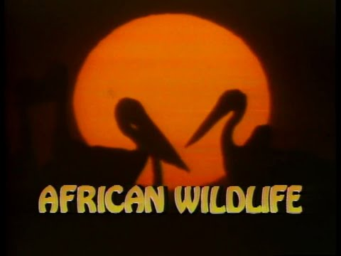 National Geographic Video: African Wildlife (1986)