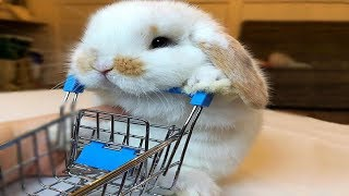 Funny Baby Bunny Rabbit Videos #8 - Cute Rabbits 2018
