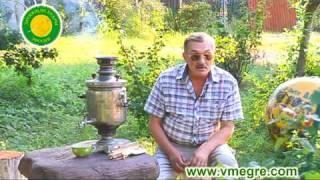 Vladimir Megre about cedar and taiga