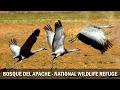 Bosque del Apache - National Wildlife Refuge