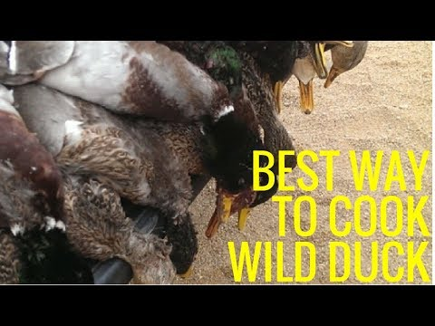 THE BEST WILD DUCK OR GOOSE RECIPE YOU'LL FIND