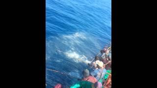 Tuna Fishing Cape Point RKT