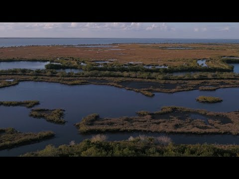Canaveral National Seashore in Titusville, FL | Florida's Space Coast