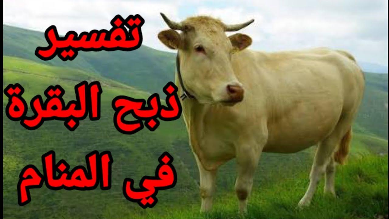 تفسير الاحلام رؤية ذبح البقرة في المنام لابن سيرين Youtube