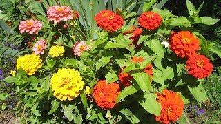 видео Уход за растениями сада. Календарь работ в саду.