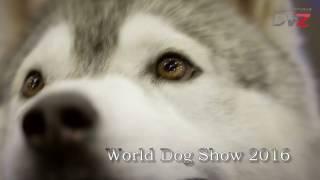 Выставка собак World Dog Show 2016