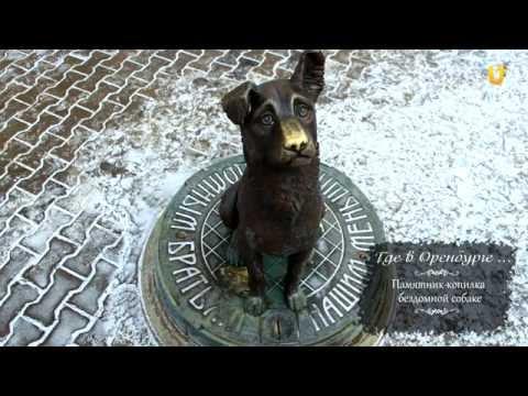 Где в Оренбурге... Памятник-копилка бездомной собаке.