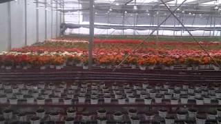 greenhouse vietnam