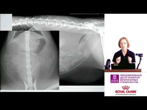 Налетова К. Н. - Рентгенография желудочно-кишечного тракта