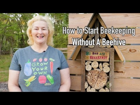 How To Start Beekeeping Without A Beehive
