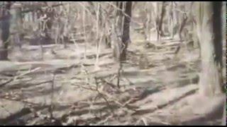 Беспредел ВСУ в лесах Херсонской области Цюрупинского района(Этот видео сюжет который не покажут в Украине и не предадут огласки обществу, так как сегодняшней власти..., 2016-02-14T14:19:25.000Z)