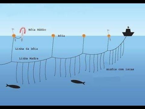Pesca De Espinhel