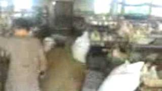 karachi memon goth poultry farm