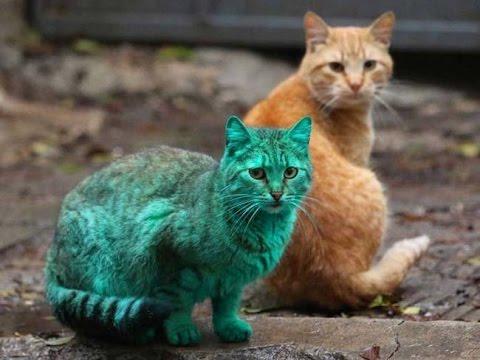 Download 97+  Gambar Kucing Tidak Berwarna Paling Keren Gratis