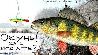 Где искать окуня в ноябре декабре на зимней рыбалке Где стоит окунь после ледостава