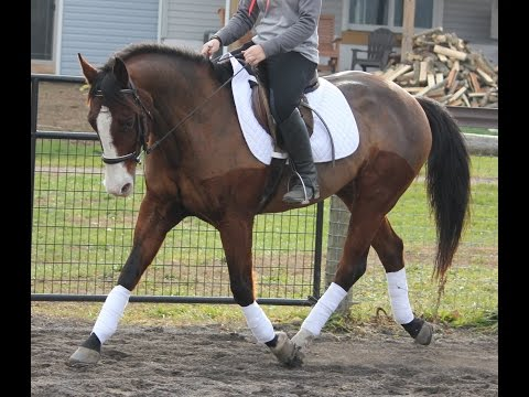 Purchased Quiet  gelding  sale/lease PA-