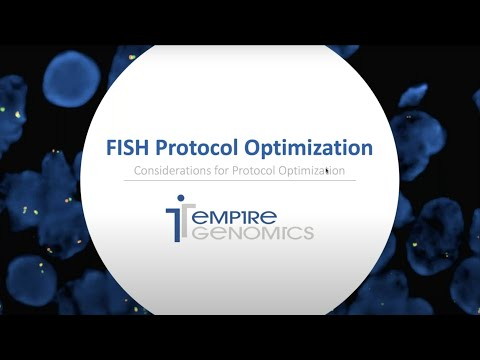FISH Probe Optimization