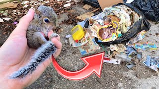 HELPLESS BABY SQUIRREL FOUND INJURED IN TRASH PILE ! WHAT HAPPENED ?!