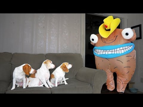 Funny Dogs vs Creepy Monster Prank: Funny Dogs Maymo, Penny & Potpie