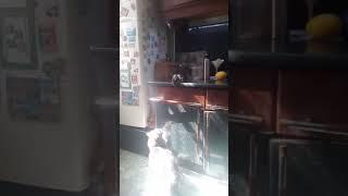 Cat vs rat /кошка против крысы