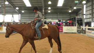 Finding Your Perfect Equine Partner - Equitana 2018