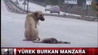 泣ける 母犬の愛 お願い子犬を助けてと・・心が痛いThe mother dog is desperate and asking for help.