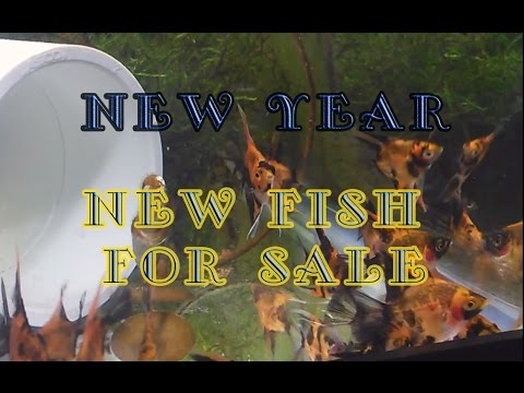 A new Year, Some new fish and Angels for sale!