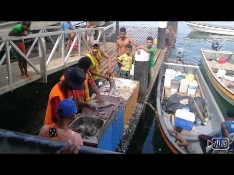 Koki Fish Market Port Moresby, Papua New Guinea~