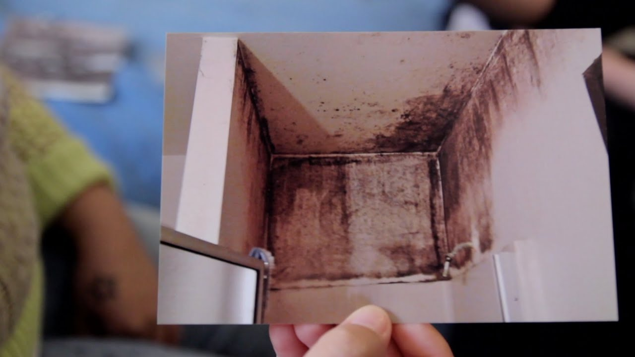 California Law Gives Tenants New Recourse For Moldy Apartments   KPBS