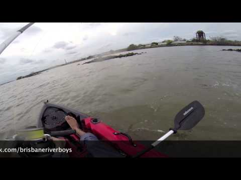 70cm Jew Fish at Port Of Brisbane on Dragon Kayaks