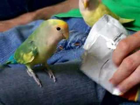 Lovebird & Chip Bag